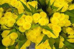 Flores amarillas, amarillas Imagen de archivo libre de regalías