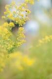 Flores amarillas asoleadas Foto de archivo libre de regalías