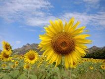Flores amarillas brillantes 7 fotos de archivo libres de regalías