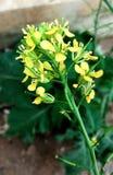 Flores amarillas brillantes Imagen de archivo libre de regalías