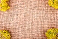 Flores amarillas brillantes en el fondo de la arpillera Foto de archivo