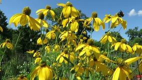 Flores amarillas brillantes y cielo azul almacen de video