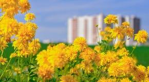 Flores amarillas cerca del edificio Imagen de archivo libre de regalías