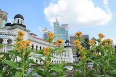 Flores amarillas con la ciudad Imagenes de archivo