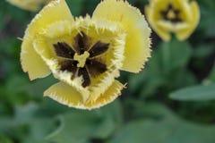 Flores amarillas con las hojas verdes imagenes de archivo