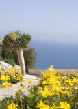 Flores amarillas con palmtree Imagenes de archivo