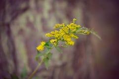 Flores amarillas con una abeja fotografía de archivo libre de regalías