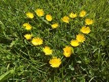 Flores amarillas crecidas forma del corazón Imágenes de archivo libres de regalías