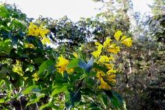Flores amarillas de fascinación bajo luz del sol imágenes de archivo libres de regalías