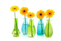 Flores amarillas de Gerber en pocos floreros de cristal Imágenes de archivo libres de regalías