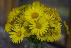 Flores amarillas de la margarita en florero Foco selectivo Fotos de archivo
