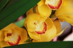 Flores amarillas de la orquídea Imágenes de archivo libres de regalías