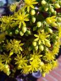 Flores amarillas de la primavera en el sol 4k Foto de archivo