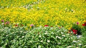 Flores amarillas de los jardines Fotografía de archivo libre de regalías