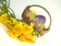 Flores amarillas de Pascua Fotografía de archivo libre de regalías