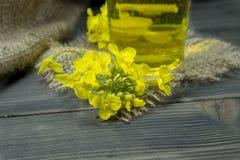 Flores amarillas del canola o de la rabina con aceite imagenes de archivo