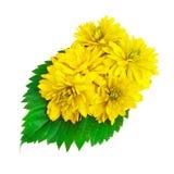 Flores amarillas del color con las hojas verdes Fotografía de archivo