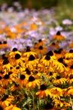 Flores amarillas del cono en un campo fotografía de archivo libre de regalías