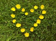 Flores amarillas del corazón dispuestas Imágenes de archivo libres de regalías