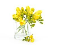 Flores amarillas del freesia fotos de archivo