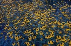 Flores amarillas del jardín fotografía de archivo