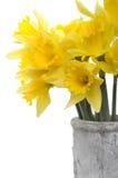 Flores amarillas del narciso Imagenes de archivo
