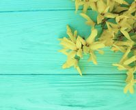 flores amarillas del otoño en fondo de madera de la menta Fotos de archivo libres de regalías
