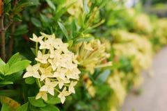 flores amarillas del punto y hoja verde en al aire libre fotos de archivo libres de regalías