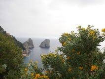 Flores amarillas en arbustos en la costa Foto de archivo libre de regalías