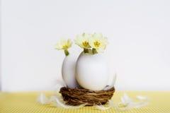 Flores amarillas en cáscaras de huevo Imágenes de archivo libres de regalías