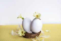 Flores amarillas en cáscaras de huevo Imagen de archivo libre de regalías