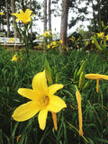 Flores amarillas en el bosque Fotos de archivo