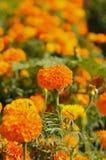 Flores amarillas en el cielo Foto de archivo