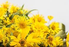 Flores amarillas en el fondo blanco Foto de archivo libre de regalías