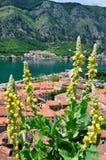 Flores amarillas en el fondo del panorama de la ciudad de Kotor Imagen de archivo