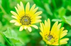 Flores amarillas en el jardín fotos de archivo
