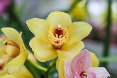 Flores amarillas en el jardín Imágenes de archivo libres de regalías