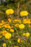 Flores amarillas en el jardín botánico fotografía de archivo