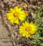 Flores amarillas en el país de la colina imagenes de archivo