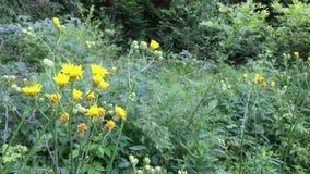 Flores amarillas en el primer, bosque profundo metrajes