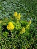 Flores amarillas en el remiendo verde 4k Imagen de archivo libre de regalías