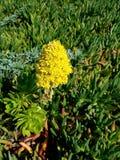 Flores amarillas en el remiendo verde 4k Imágenes de archivo libres de regalías