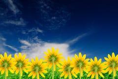 Flores amarillas en fondo brillante del verano fotos de archivo libres de regalías