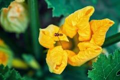 Flores amarillas en jardín fotografía de archivo