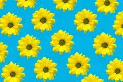 Flores amarillas en la forma de un corazón Fotos de archivo libres de regalías
