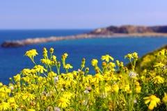 Flores amarillas en la isla Imágenes de archivo libres de regalías