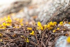 Flores amarillas en la planta Fotografía de archivo