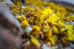 Flores amarillas en la planta Fotos de archivo libres de regalías