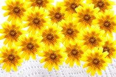 Flores amarillas en la servilleta y el fondo blancos Imágenes de archivo libres de regalías