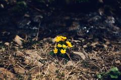 Flores amarillas en la tierra Imagenes de archivo
